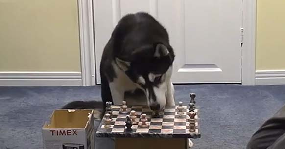 instructions on how to play chess