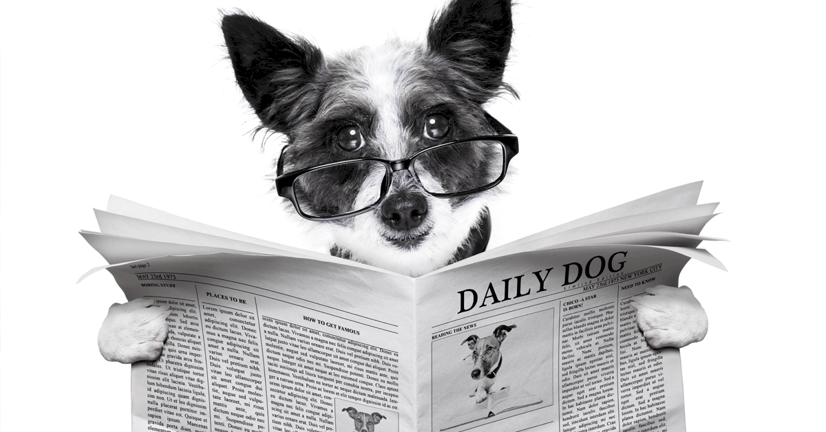 How Many Words Can Dogs Learn