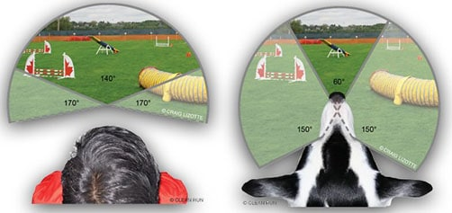 how-dogs-see-the-world-image-2