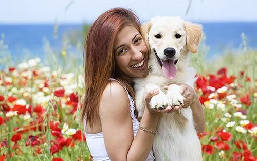success-dogs-positive-reinforcement-training