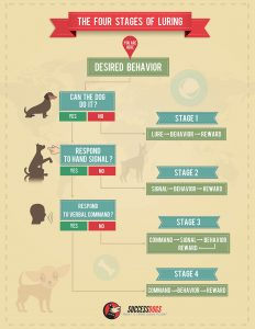 Dog Training Infographic - The Four Stages of Luring