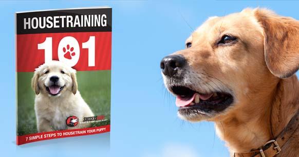Free Puppy House Training Ebook Housetraining 101