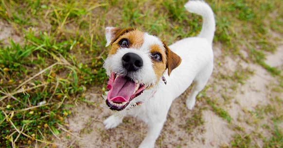 How To Stop A Dog From Barking Success Dogs