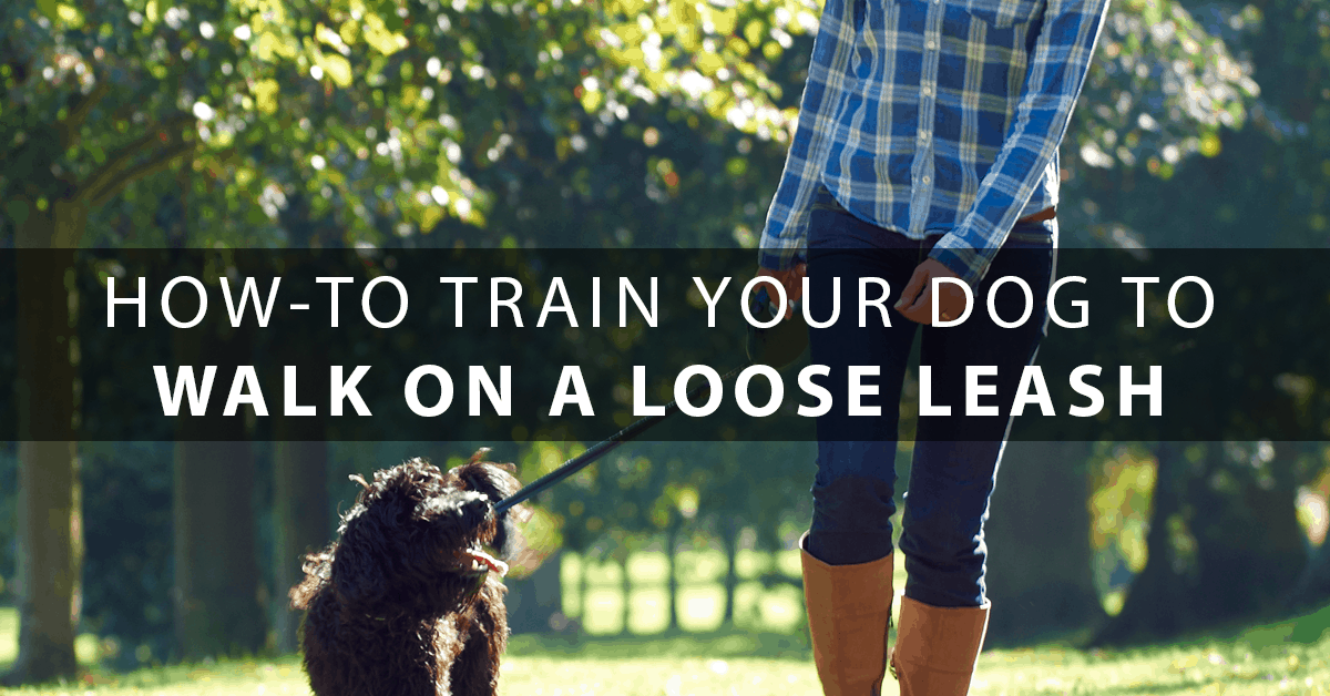How To Train Your Dog To Come To You