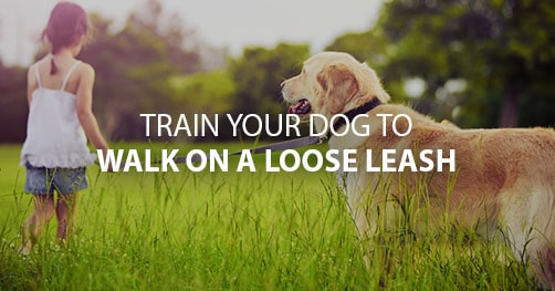 Training your dog to walk on a loose leash