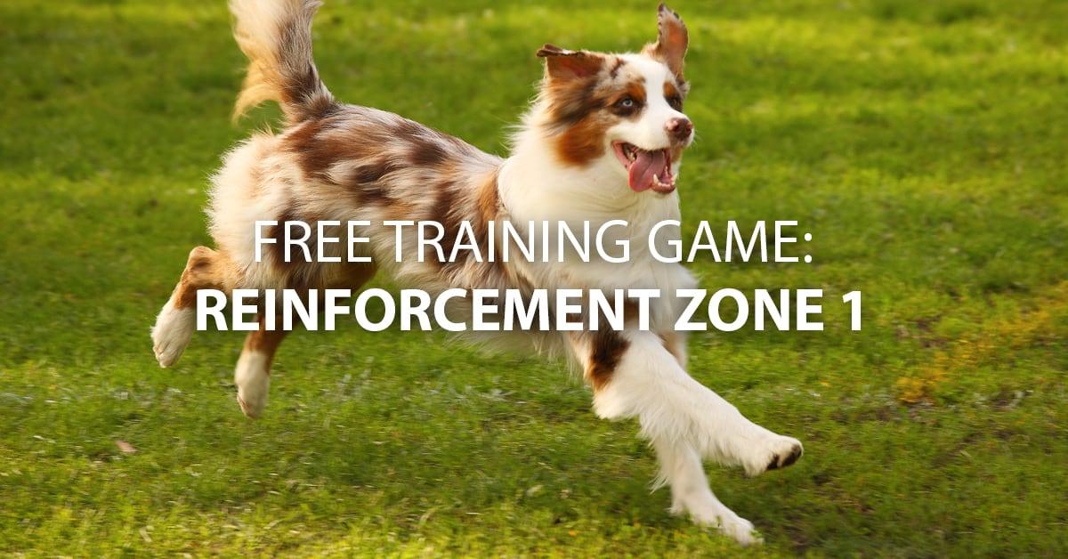 Send My Dog Away For Training